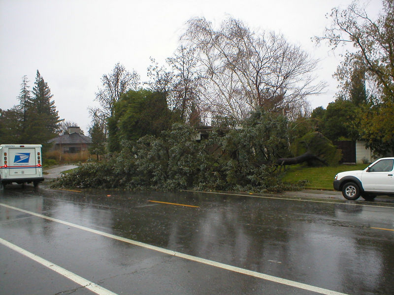 Fallen tree blocking traffic. Viewed from across the street.