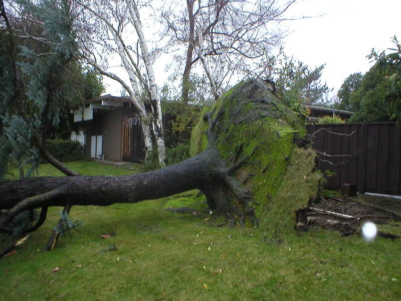 Tree blocking the trail!