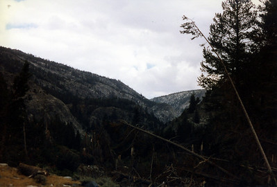 Wider view of avalanche damage in the canyon bottom.