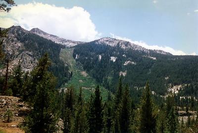 Avalanche chute below Ward Mountain.