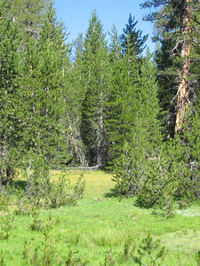 Lush meadow scene