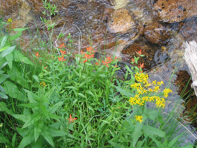 Colorful flowers along the creek