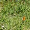 Butterfly in the Meadow!