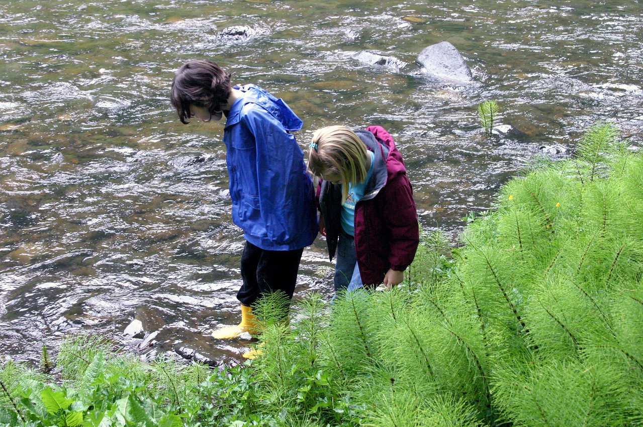 """<font size=""""+1"""">We're camped in a little spot along Cedar Creek about 3 miles up from where it joins the Wilson River just West of the Jones Creek Campground. </font>"""