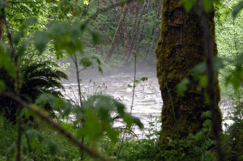 "<font size=""+1"">It was a rainy weekend, but warm and humid..  When we walked down to the creek and found this totally weird fog rising off the creek..  If the kids hadn't been there, it might have been spooky.. </font>"