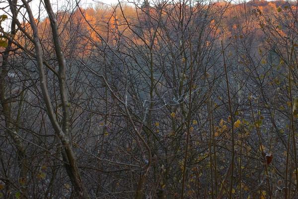 Camping November 2012