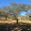 Little Boy, Big Oak Trees, Itty Bitty Daytime Moon