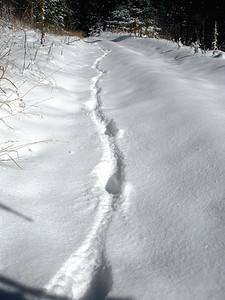 More puppy tracks!
