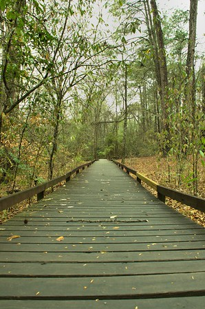 Congaree National Park Hiking 3/20/15