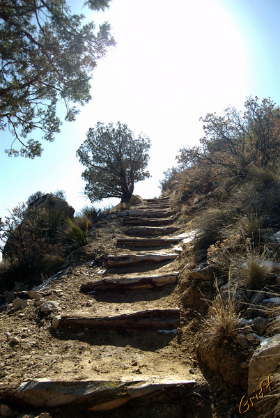 It is quickly visible that the Guadalupe Peak Trail is a well established and maintained trail.  These log steps make climbing safer but really work on your thighs.