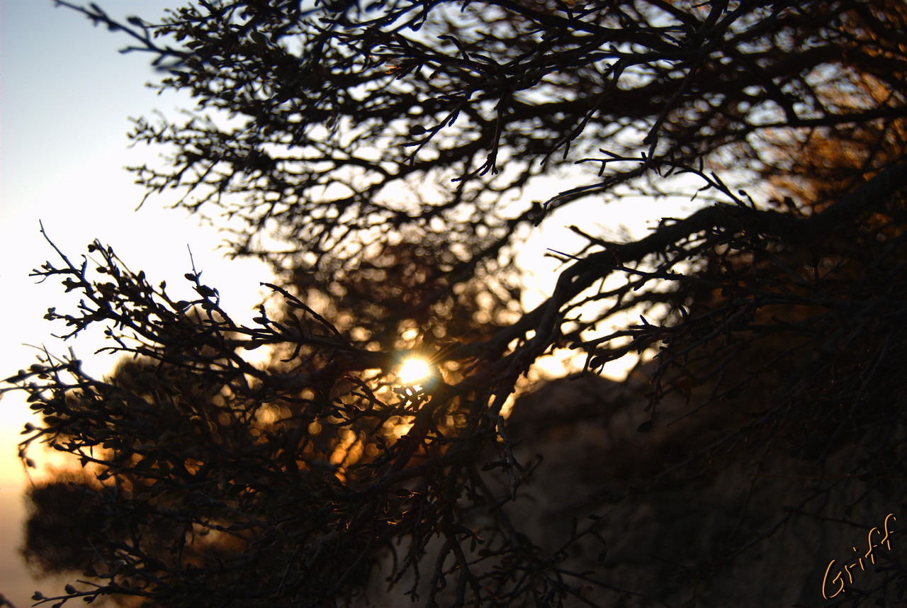 After setting up camp, I hiked back up to the peak to take some sunset photos.  Here is a photo of the nearly setting sun through some brush where I decided to hunker down out of the wind while I waited.