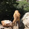 Delicate Deer