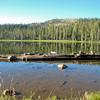 Gumboot Lake w/ Log