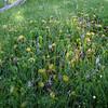 Carnivorous Pitcher Plants!