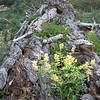 Happy Blooms through Rotting Log