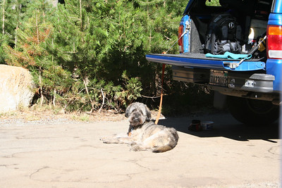 Wookie laying near the truck.