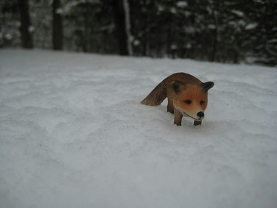 Even the Fox had to tredge through some snow