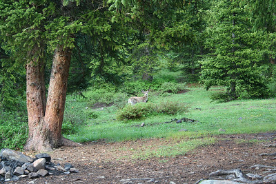 Our visitor at our fist campground on Lilly Pond.