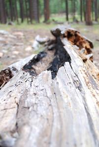 It's a log.  It was struck by lightning.