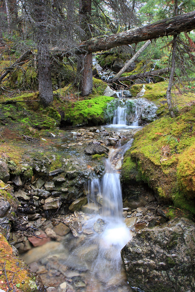 This small but beautiful fall was spotted on the trail around Lake O'Hara in Yoho National Park