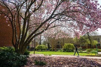 Fairfax Campus Arboretum