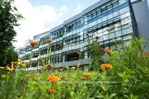 Summer flowers on Mason's Fairfax campus. (Photo by Bethany Camp/Creative Services/George Mason University)