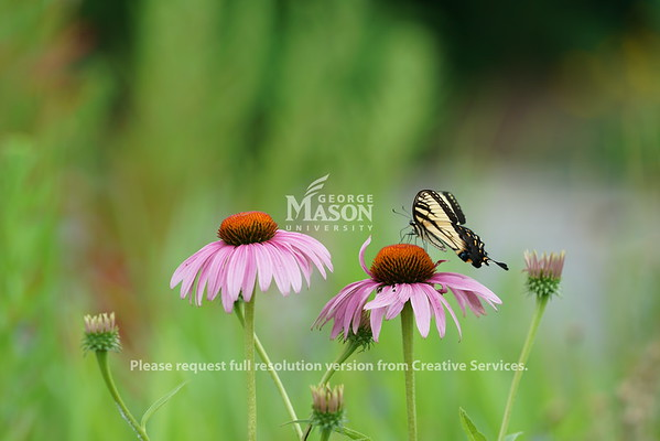 Wildflowers with a butterfly. Photo by Evan Cantwell/Creative Services