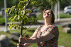 """Nicole Brugliera helps plant trees in front of the ConocoPhillips Integrated Science Building during a belated Arbor Day volunteer tree-planting event to honor UAA's 10 years as a certified Arbor Day Foundation Tree Campus.  <div class=""""ss-paypal-button"""">190614-ARBOR DAY TREE PLANTING-JRE-0377.jpg</div><div class=""""ss-paypal-button-end""""></div>"""