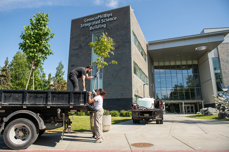"""Zane Miller from UAA Facilities and Maintenance unloads trees with the horticulture team in front of the ConocoPhillips Integrated Science Building in preparation for a belated Arbor Day volunteer tree-planting event to honor UAA's 10 years as a certified Arbor Day Foundation Tree Campus.  <div class=""""ss-paypal-button"""">190614-ARBOR DAY TREE PLANTING-JRE-0075.jpg</div><div class=""""ss-paypal-button-end""""></div>"""
