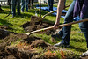 """Volunteers plant trees in front of the ConocoPhillips Integrated Science Building during a belated Arbor Day volunteer tree-planting event to honor UAA's 10 years as a certified Arbor Day Foundation Tree Campus.  <div class=""""ss-paypal-button"""">190614-ARBOR DAY TREE PLANTING-JRE-0442.jpg</div><div class=""""ss-paypal-button-end""""></div>"""
