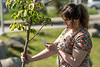 """Nicole Brugliera reads about the tree she's helping with as volunteers plant trees in front of the ConocoPhillips Integrated Science Building during a belated Arbor Day volunteer tree-planting event to honor UAA's 10 years as a certified Arbor Day Foundation Tree Campus.  <div class=""""ss-paypal-button"""">190614-ARBOR DAY TREE PLANTING-JRE-0367.jpg</div><div class=""""ss-paypal-button-end""""></div>"""