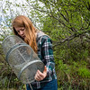 UAA Biology Graduate Student Kelly Ireland checks minnow traps at South Rolly Lake as researchers from UAA, University of Massachusetts Lowell, University of Connecticut, and University of Texas at Austin collaborate on a joint field collection of stickleback fish. The tiny and abundant fish are the subject of intensive study at UAA and elsewhere because of their genetic variability and their surprising physiological parallels with humans.<br /> <br /> 190528-KELLY IRELAND STICKLEBACKS-JRE-0539