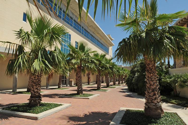 bay-hall-palms-high_7222885766_o