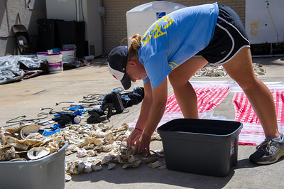 Graduate student Meredith Diskin cleans up some of her supplies she is using for her Master's Thesis Experiment over Predation Intensity.
