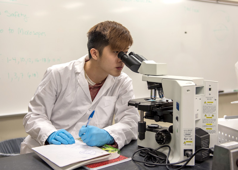 Student Brandon Phung observes different microscopic organisms during a Microbiology lab.