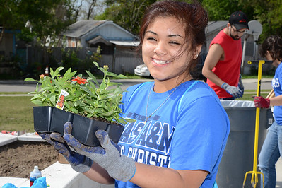 students-plant-spring-flowers-at-the-antonio-e-garcia-centers-community-garden-as-a-part-of-student-volunteer-connections-big-event_25668054232_o