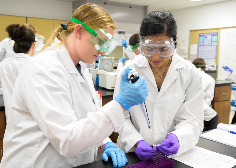 Jolee Connelly (left) and Kimberly Jacinto work on pipetting uninduced culture cells during a Chemistry lab.