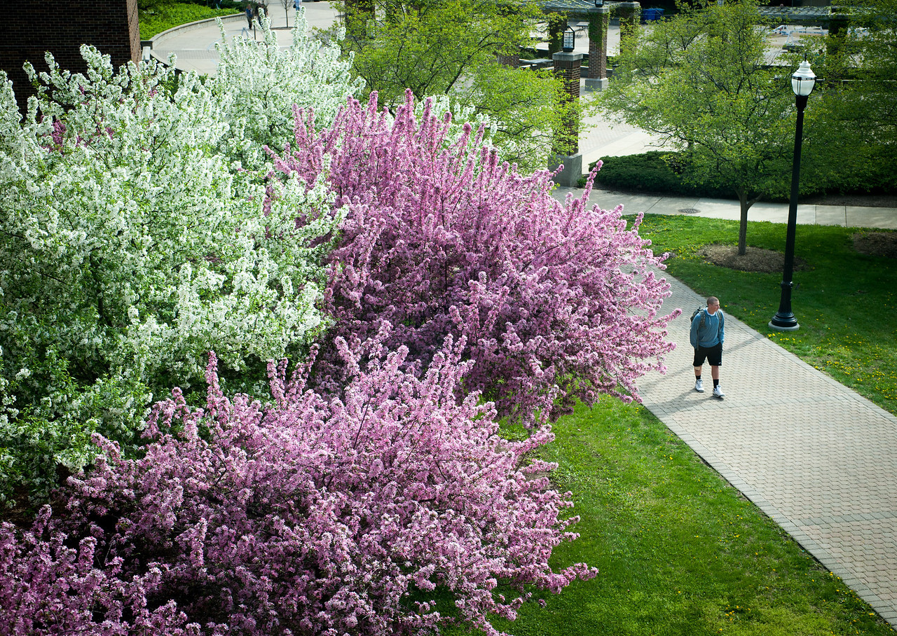 Spring campus scenes taken outside of Science Building facing towards Dede Plaza