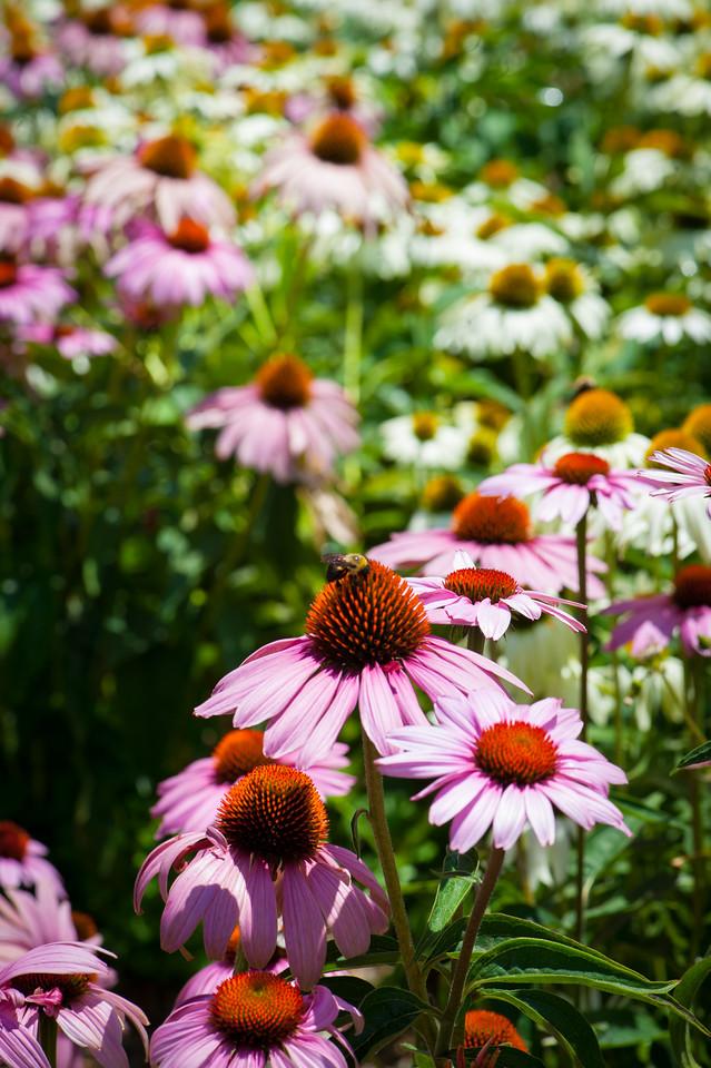 Flowers in Rankin Plaza