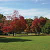 Brookdale in the fall