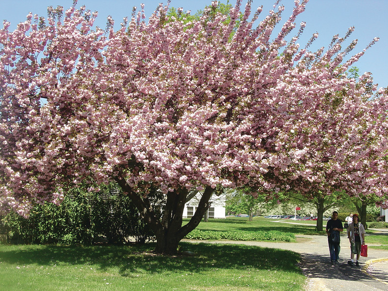 Spring at Brookdale