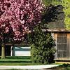 The Corncrib in spring