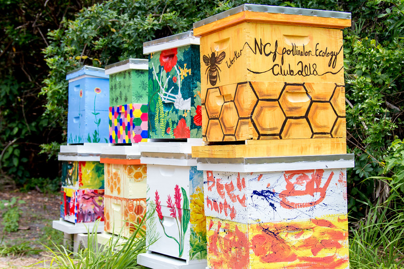 The bee boxes were painted by students from the biology and arts programs, as well as kids from the College's Child Care Center.