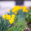 April 12, 2021 - Spring on Uptown Campus
