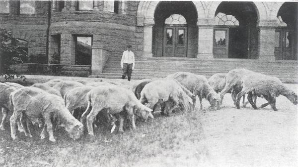 Palmer Hall with Sheep Grazing circa 1911