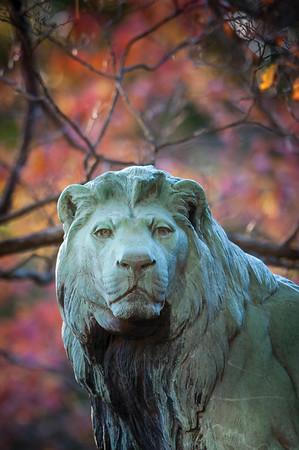Lion closeup 10.20.12