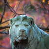 Lion closeup 10.20.12