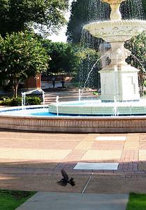 Laura Harrison Fountain