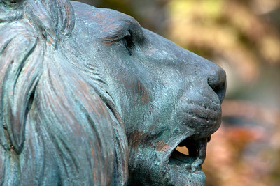 One of the statues of a family of lions which grace our campus.