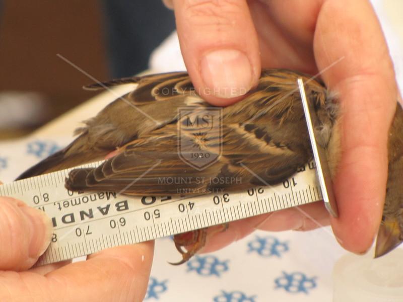 Bird_banding-9-13-2012_IMG_1535